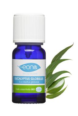 Organic Eucalyptus globulus Essential Oil